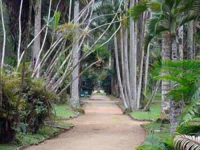 Photo of Jardim Botânico in Rio de Janeiro