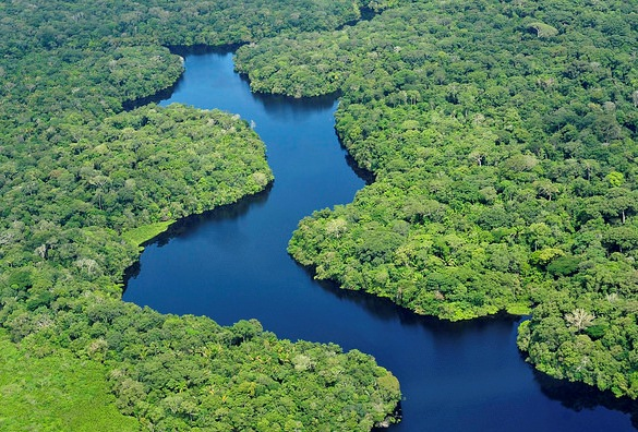 Amazonas Rainforest from the Air, Amazonas