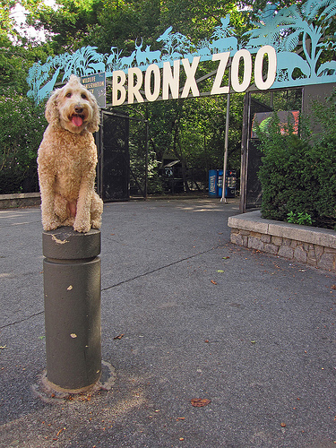 A Photo of Bronx Zoo Entrance in New York