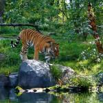 <b>Gli Zoo di New York da Visitare con i Bambini</b>