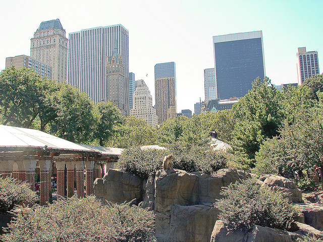 A Photo of Central Park Zoo, New York