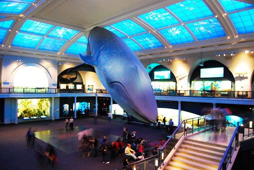 Milstein Hall of Ocean Life, American Museum of Natural History, New York