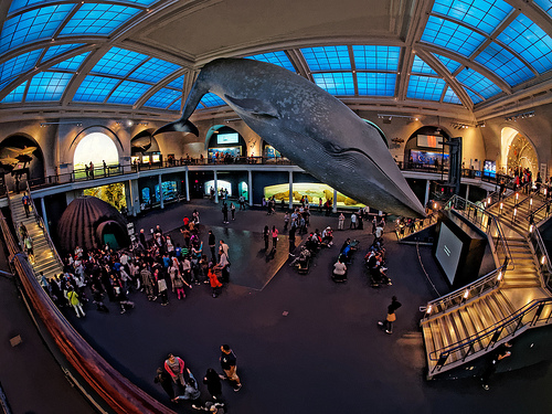 The Giant Blue Whale Model, American Museum of Natural History, New York