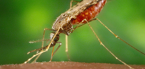 The mosquito is the worlds deadliest animal and CDC is fighting mosquito-borne diseases worldwide