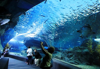 Siam Ocean World at Siam Paragon, Bangkok, Thailand