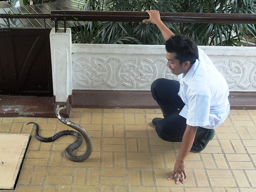 Snake Farm (Queen Saovabha Institute) in Bangkok