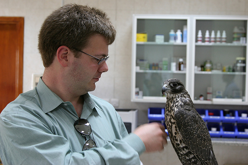 Falcon Hospital near Abu Dhabi Airport, UAE