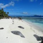 <b>Quando Andare alle Seychelles: Quando Piove, i Mesi Migliori, le Maree, le Alghe, le Temperature. Guida Completa al Clim...</b>