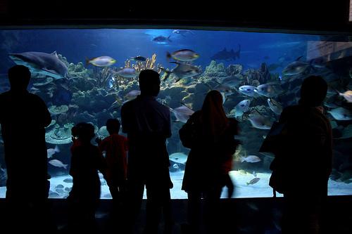 A Photo of Aquaria at KLCC in Kuala Lumpur, Malaysia