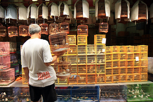 Photo of Bird Market in Mongkok, Kowloon, Hong Kong