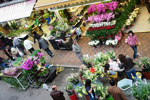 Photo of Flower Market Street in Mongkok, Kowloon, Hong Kong