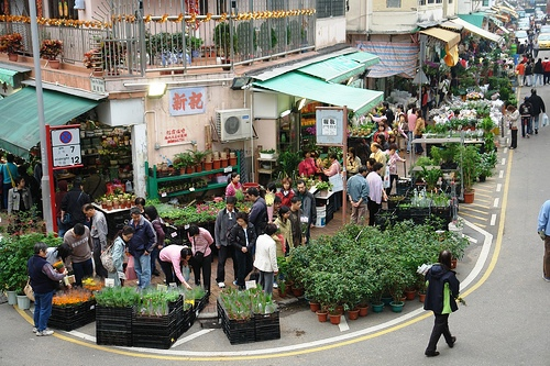 Photo of Flower Market Street, Mongkok, Kowloon, Hong Kong