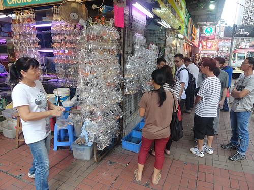 Photo of Goldfish Market in Mongkok, Kowloon, Hong Kong