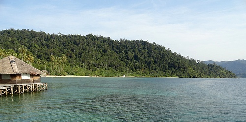 The Beach and the Forest, Pulau Cubadak, Sumatra, Indonesia