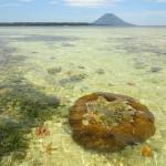 <b>Le Isole di Bunaken e Siladen: i Coralli Più Belli d'Indonesia</b>