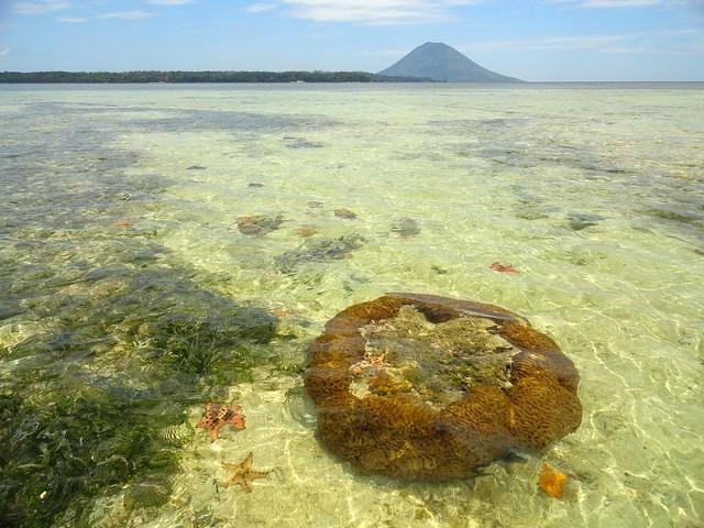 Le Isole di Bunaken e Siladen: i Coralli Più Belli d'Indonesia