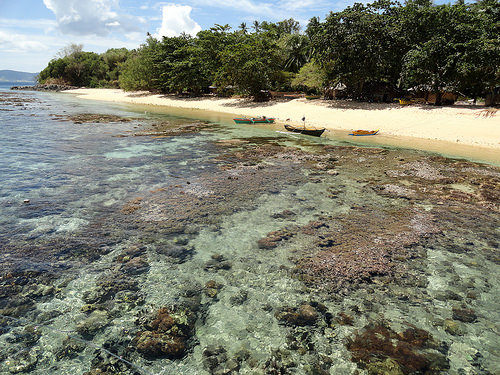 The Reef from the Pier of Coral Eye, Pulau Bangka, North Sulawesi, Indonesia