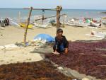 Photo of Agar Agar Algae in South Sulawesi in Indonesia