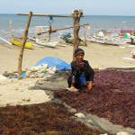 Photo of Agar Agar Algae in South Sulawesi in Indonesia