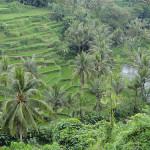 <b>Ubud, il Cuore di Bali: Dove Alloggiare e Cosa Fare</b>