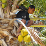 Coconut boy near Apatana fishing village in Selayar Island South Sulawesi Indonesia