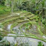<b>Le Escursioni Più Belle di Bali: in Bicicletta da Batur ad Ubud ed il Rafting sui Fiumi Ayung e Telaga Waja</b>