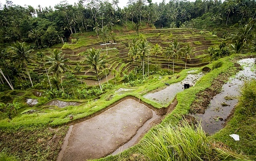 Tegalalang Rice Terraces, North of Ubud, Bali, Indonesia
