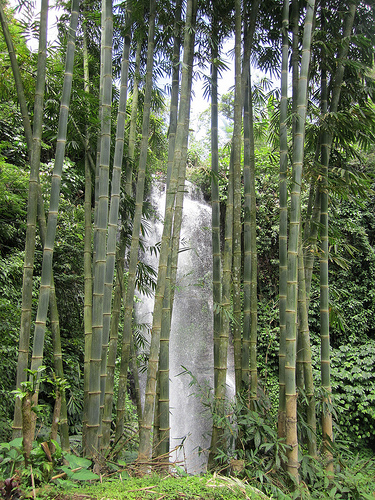 Waterfalls near Munduk in Bali, Indonesia
