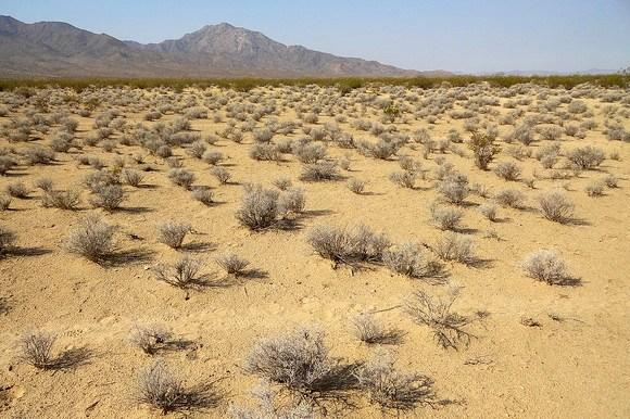 Desert Landscape in the Mojave National Preserve in California