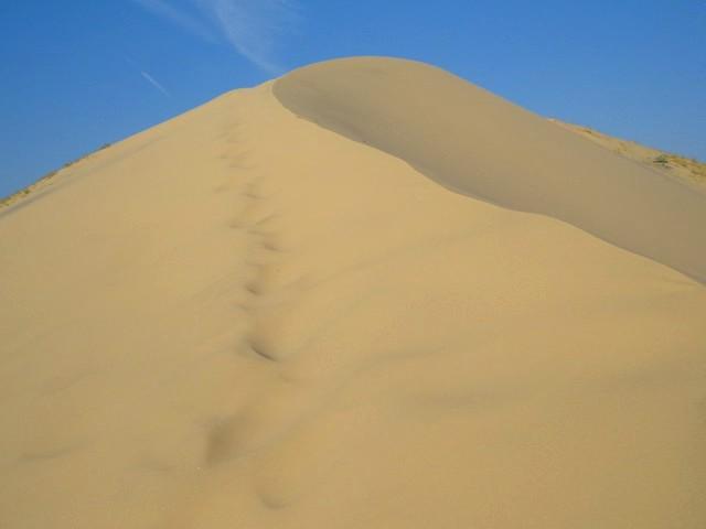 Top of Kelso Dunes, Mojave Preserve, California