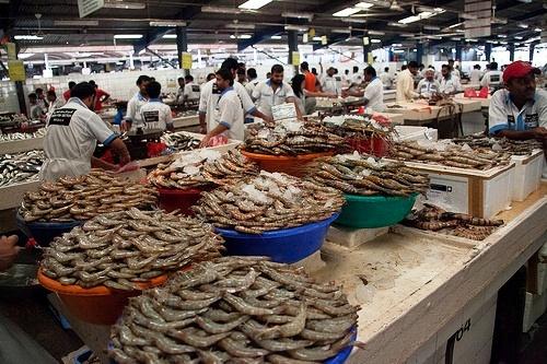 Deira Fish Market, Dubai, United Arab Emirates