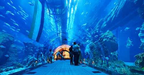 Dubai Aquarium, Dubai Mall, Downtown Dubai, United Arab Emirates