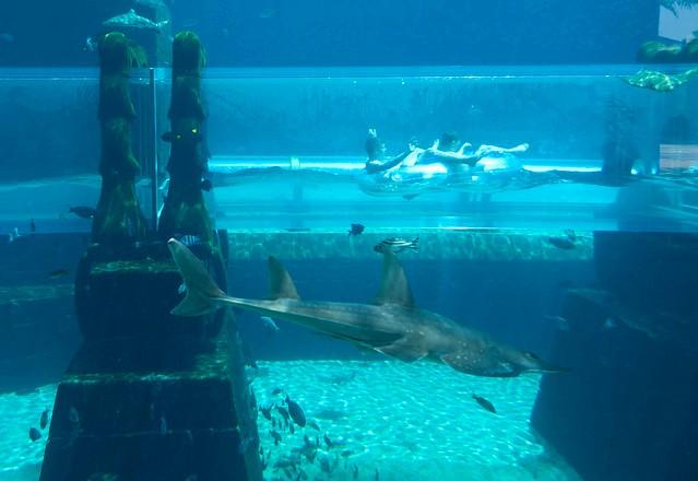 Sharks, Aquaventure, Atlantis The Palm, Palm Jumeirah, Dubai, UAE