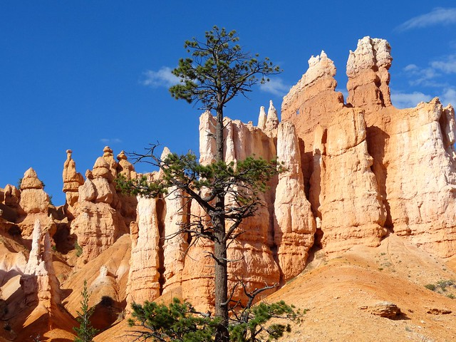 Bryce Amphitheater, Queens Garden Trail, Bryce Canyon National Park, Utah