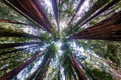 Muir Woods National Monument, San Francisco, California