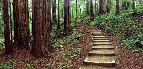 Trail in Muir Woods National Monument, San Francisco, California
