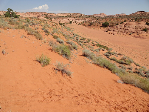 Wash in the upper section of Spooky Gulch in Grand Staircase-Escalante National Monument, Utah
