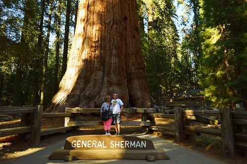 Di fronte al General Sherman Tree a Sequoia National Park, California