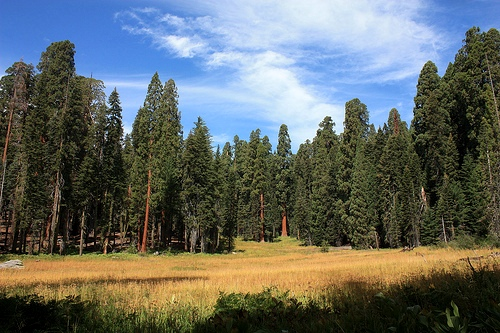 Crescent Meadow, Giant Forest, Sequoia National Park, California