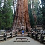 <b>Sequoia, Escursione al General Sherman Tree: la Photogallery</b>
