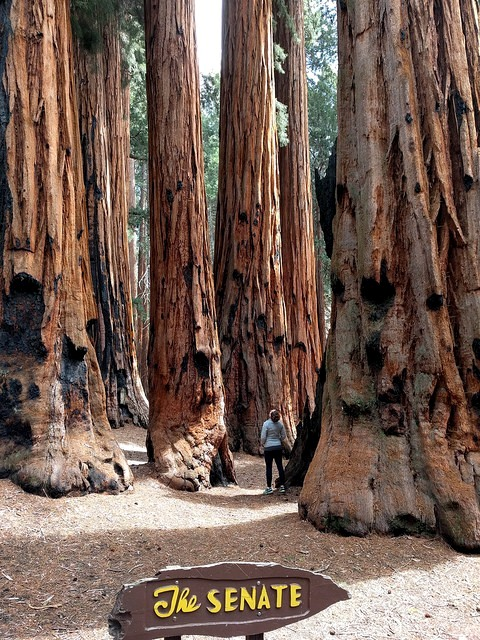 The Senate Group, Congress Loop Trail, Giant Forest, Sequoia National Park, California
