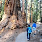 <b>Sequoia, Escursione al Congress Loop Trail: la Photogallery</b>