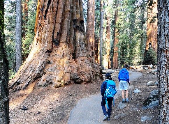 Escursione al Congress Loop Trail al Parco Nazionale di Sequoia in California