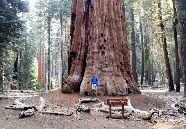 Guida a Sequoia e Kings Canyon National Park: Dove Dormire e Come Arrivare