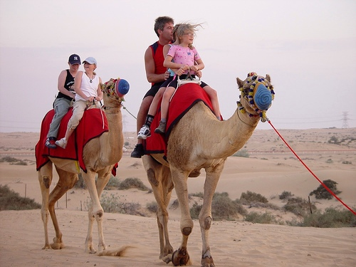 Dubai Desert Safari and Camel Rides, UAE