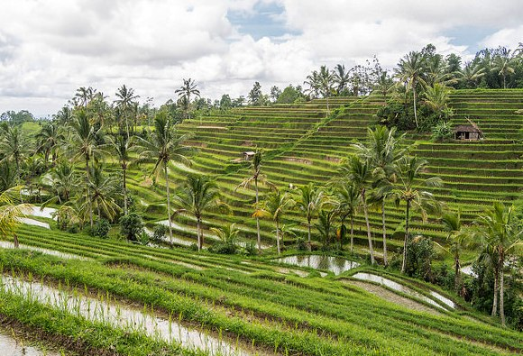 A Nice View of Jatiluwih Rice Terraces in Bali, Indonesia