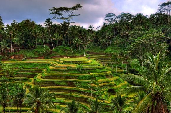 I Migliori Tours Organizzati a Bali