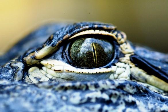 Guida ai Migliori Tours Organizzati alle Everglades da Miami