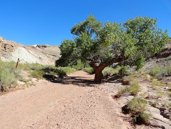The wash between the trailhead and the meeting point of Bell and Little Wild Horse Canyon, San Rafael Swell, Utah
