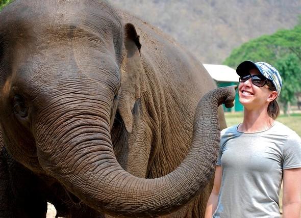 Elephant at Elephant Nature Park, Chiang Mai, Thailand